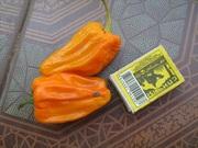 Семена перца комнатного салатного Балконное чудо