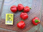 Семена перца комнатного салатного Красный гогошар