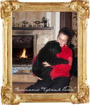 черный терьер - отличные породистые щенки
