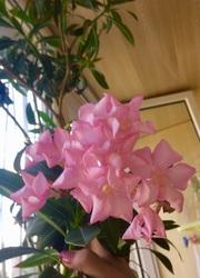 Продам комнатные цветы молодые